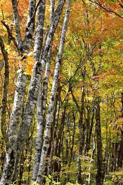 外山森林公園紅葉 171015 (7)