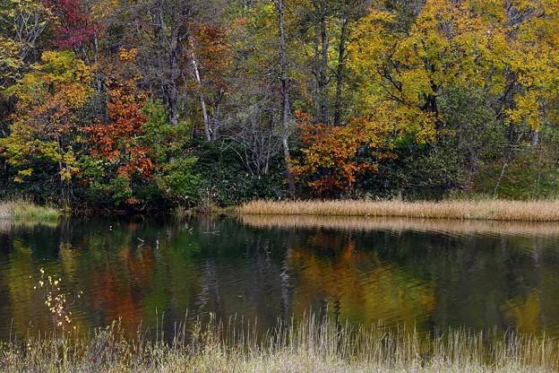 外山森林公園紅葉 171015