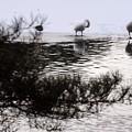 高松の池 180102 (5)