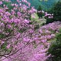写真: ピンクのお山