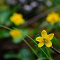 写真: 水辺の黄色