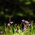 写真: 陽気な野原