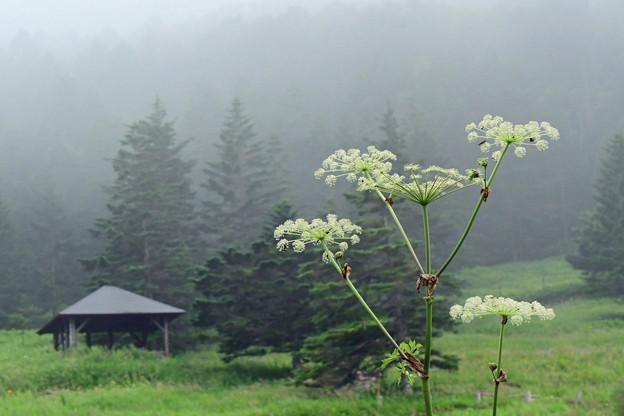 写真: 霧空のはなび