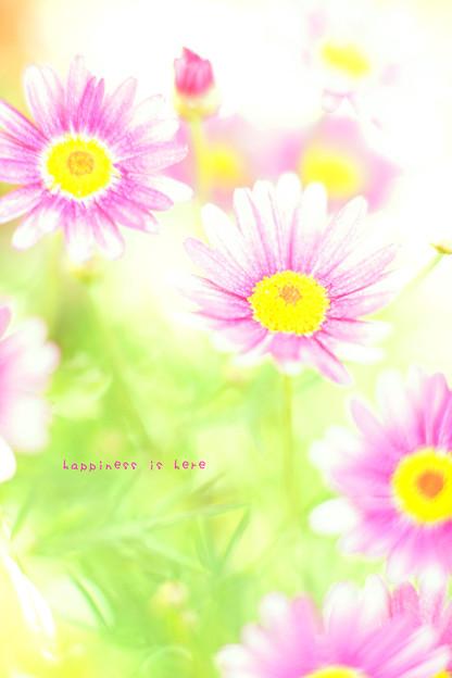 写真: flower3-379