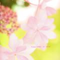 写真: flower3-380