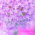 写真: flower3-384