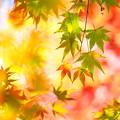 写真: 秋を流して