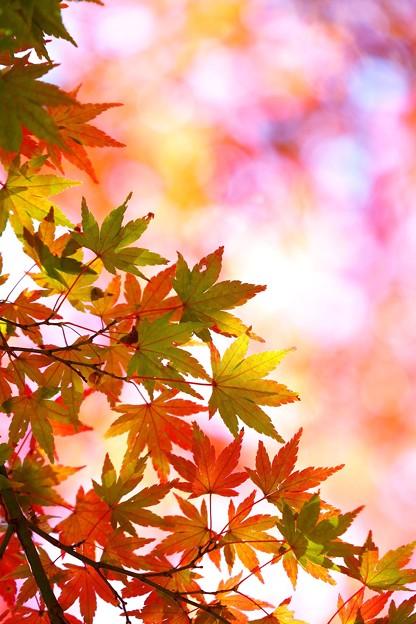 写真: 秋を奏でて