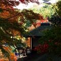 写真: 澄み渡る秋に