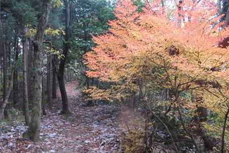 171129頼成山、紅葉と自然 2完