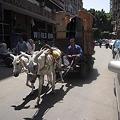 Photos: 荷車を引くロバ