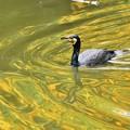 黄金の池を行く・・・