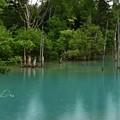 夏の思い出3(青い池)
