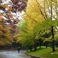 写真: 雨の公園