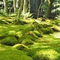 写真: 平家物語 悲恋の寺~祇王寺の苔庭