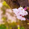 写真: 春よ来る