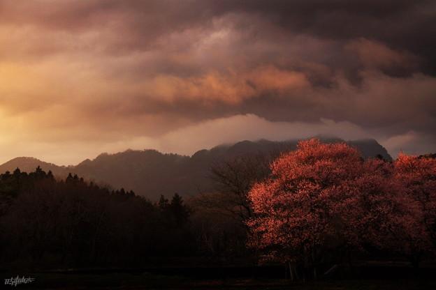 その日、春は雨上がりに夕刻を選んだ