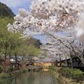 Photos: おぼろに江戸は春