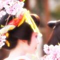 Photos: 花に魁て