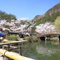桜 釣る人