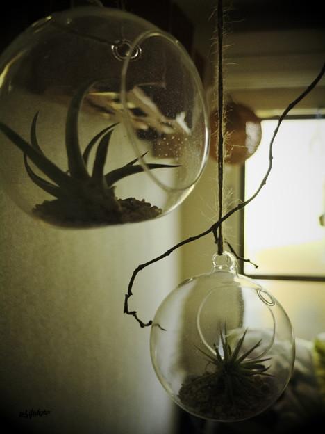 Fragile globes