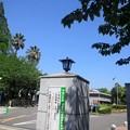 【11859号】Mii合成素材:大学 平成2904283