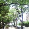 【12255号】Mii合成素材:歩道 平成2907221