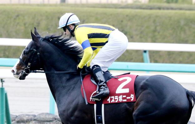 イスラボニータ(2017/12/23 阪神11R 阪神C 返し馬)
