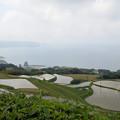 東後畑棚田2013_1