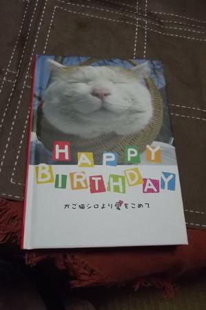 ネコの本0604