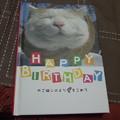 写真: ネコの本0604