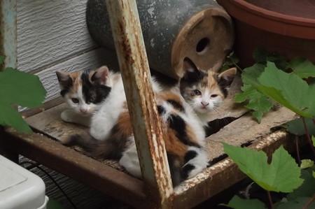 子ネコたち0618