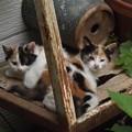 写真: 子ネコたち0618