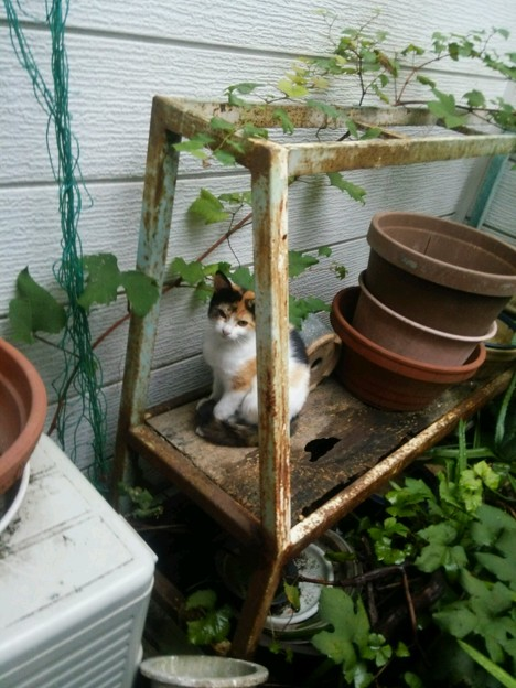 写真: もう1匹の子ネコ0907