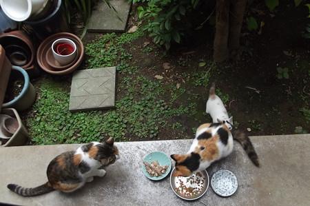 ミケママ、子ネコ、ミーシャ1013