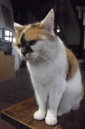 「ダニエル」のネコ1120
