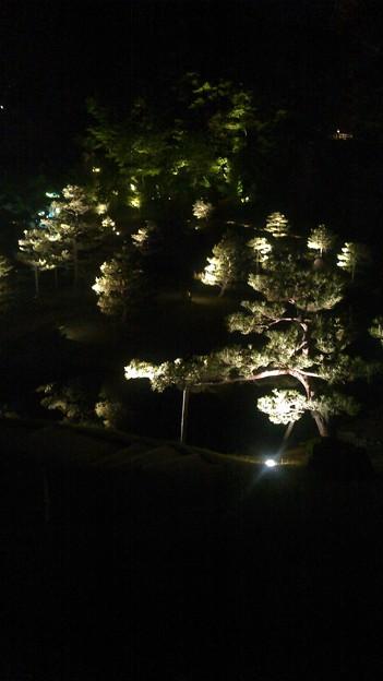 玉泉院丸庭園 今年の立夏のお茶 ライトアップのお庭で高岡ラムネと加賀棒茶