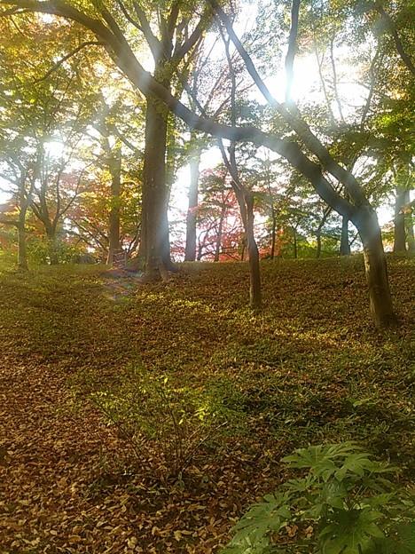 武蔵野の雑木林  #いい庭 at殿ヶ谷戸庭園